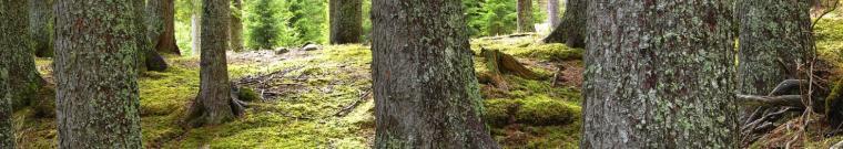 foto tronchi d'albero