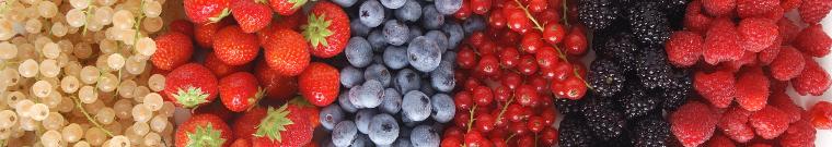 immagine piccoli frutti