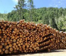 Elenco provinciale delle imprese forestali - Camera di Commercio di Trento