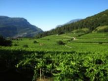 Foto di viti e montagna in Trentino
